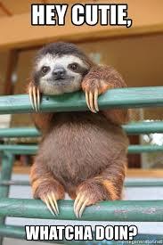 Whatcha Doin Meme - hey cutie whatcha doin sloth hanging ouy meme generator