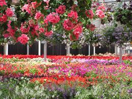 schaefer greenhouses montgomery il