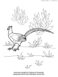 birds coloring pages 7 birds kids printables coloring pages