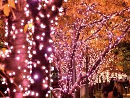 meguro river will be dyed in coloured illuminations this