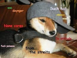 Shiba Inus Meme - 15 best such shibe images on pinterest shiba inu funny pics and