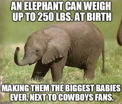 Elephant Meme - baby elephant meme generator imgflip