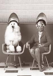 old ladies hair salon 77 best retro salon art images on pinterest hair salons vintage