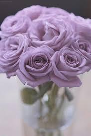 Lavender Roses Https I Pinimg Com 736x 45 9b 7c 459b7c28132729c