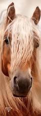 25 unique horse paintings ideas on pinterest horse art pretty