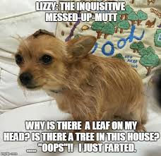 It S Messed Up Funny - lizzy the inquisitive messed up mutt imgflip