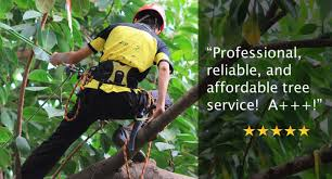 miller tree service call for tree removal in ta florida