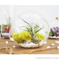 terrarium containers glass vases vase market