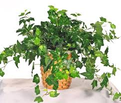 Best Plants For Bathrooms 5 Best Plants That Thrive In Your Bathroom Plant Talk