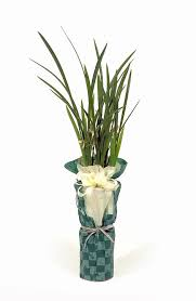 free photo potted plant packing plants free image on pixabay