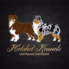 australian shepherd crufts 2015 hotshot kennels home facebook