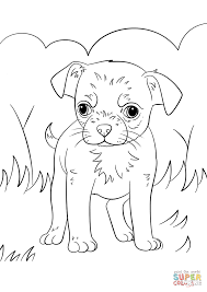 chihuahua puppy coloring free printable coloring pages