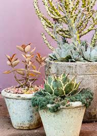 Patio Plants For Sun Drought Tolerant Container Plants Sunset