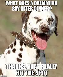 Pun Dog Meme - 8 funny dalmatian memes what every dog deserves