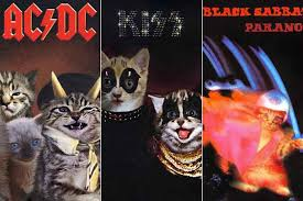 cat photo album what if kittens were on your favorite rock album covers