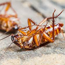 five signs you a cockroach infestation pioneer pest