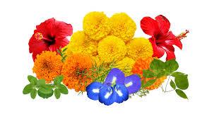 fresh flowers fresh flowers bhakti pack