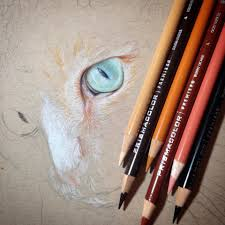 starting a color pencil drawing of sister cat imgur