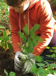 seattle native plants native plant sales are around the corner green city partnerships