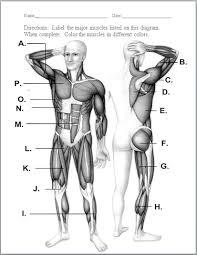 unlabeled muscular system diagram u2013 hd m com