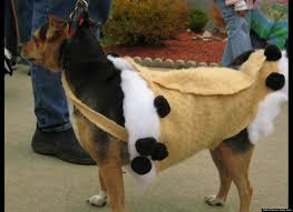 photos the funniest pet halloween costumes ever cannoli pup