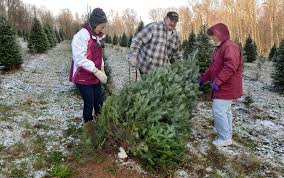 where to cut your own christmas tree in the capital region