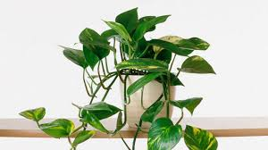 cool small house plants arts