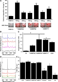 role of noncanonical wnt signaling pathway in human aortic valve