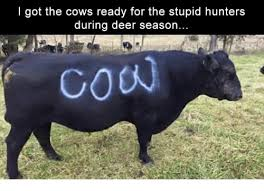 i got the cows ready for the stupid hunters during deer season
