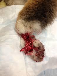 veterinary specialty hospital case studies vsh vshsd