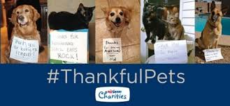 what are your pets thankful for this thanksgiving thankful pets