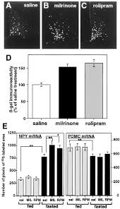 what is 138 311 as a percent downregulation of fasting induced camp response element mediated