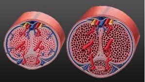 how biomanix works biomanix the best male enhancement pill on
