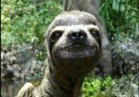 Dragon Sloth Meme - ideal dragon sloth meme kayak wallpaper