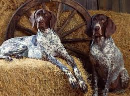 bluetick coonhound florida pin said blue tick hound which is wrong these are a fine pair of