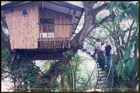 file tree house jpg file pasonanca tree house 001 jpg universal stewardship