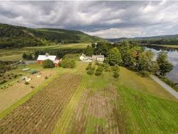 vermont couple in their 80s lists christmas tree farm for sale