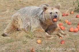 Colorado wild animals images The wild animal sanctuary near denver is a true hidden gem jpg