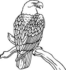 birds prey coloring pages bestofcoloring