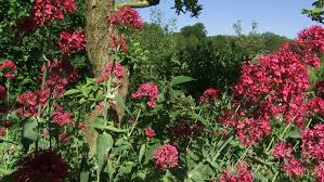 flowers of india mysore karnataka stock footage video 5853749
