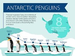 fiordland penguin facts for plantingseeds