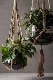 57 best images about climbing indoor plants on pinterest 2015