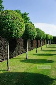 Elephant Topiary 145 Best Formal Gardens Images On Pinterest Formal Gardens