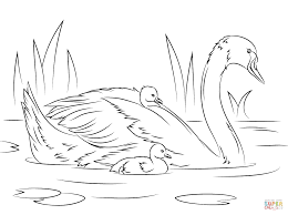 swans coloring pages free coloring pages