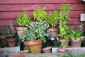 herb garden u2013 home garden tips