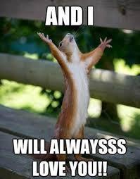 Squirrel Meme - funny squirrels funny squirrel photos squirrel memes oh so