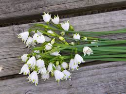 wedding flowers from springwell leucojum a dainty flower for