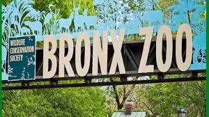 a day at bronx zoo u2013 aly no panic