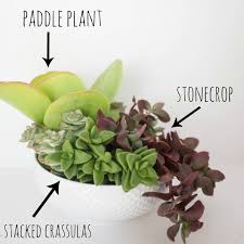 succelents how to plant a succulent container garden in a bowl