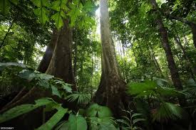 forests november 2017 browse articles conservation on malaysia